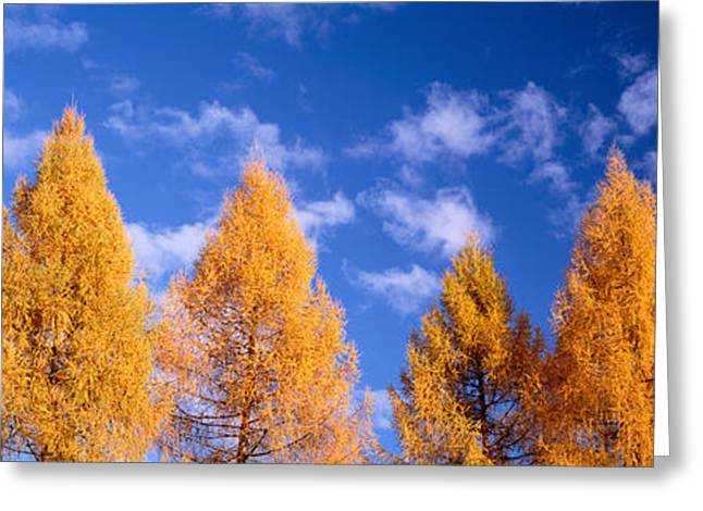 Wispy Greeting Cards - Lark Trees, Switzerland Greeting Card by Panoramic Images