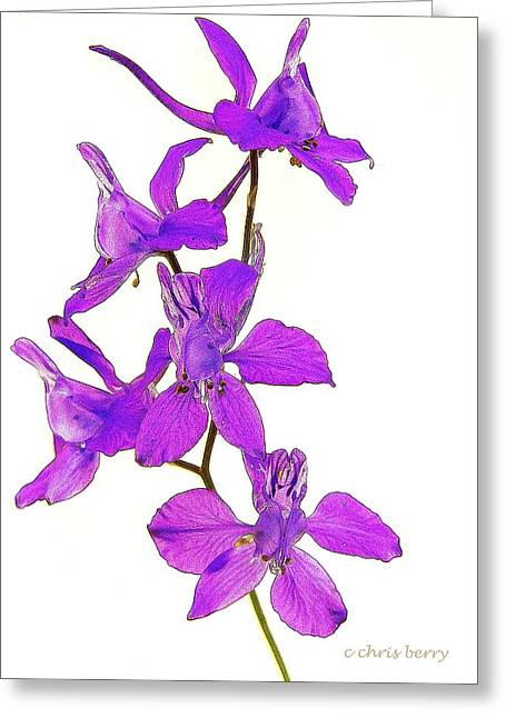 Larkspur Greeting Cards - Larkspur  Greeting Card by Chris Berry