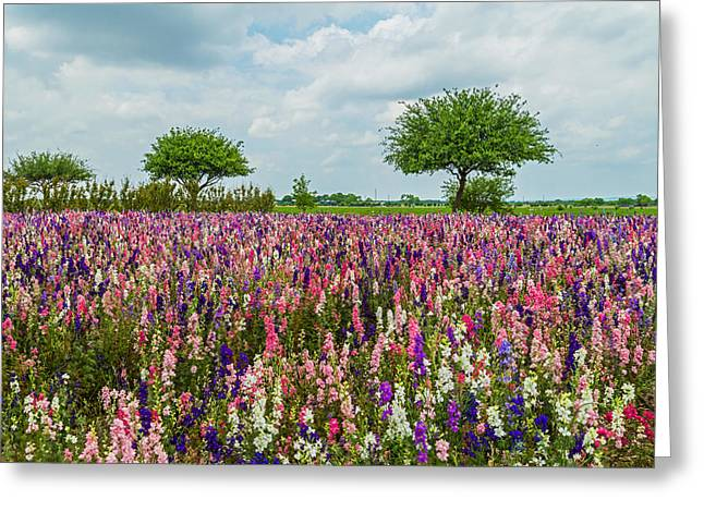 Wildseed Greeting Cards - Larkspur Fields Forever Greeting Card by Lynn Bauer