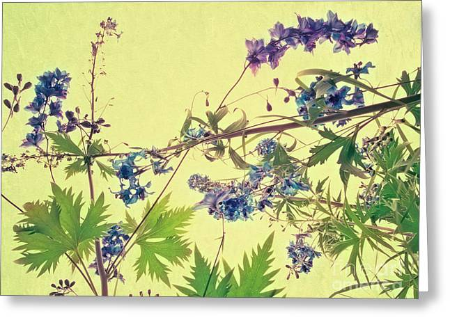 Larkspur Greeting Cards - Larkspur Greeting Card by Priska Wettstein