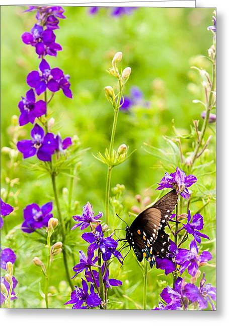 Wildseed Greeting Cards - Larkspur Visitor Greeting Card by Melinda Ledsome