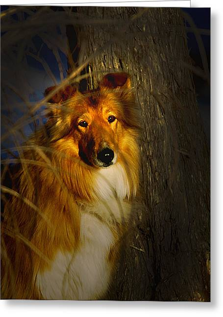 Lassie Come Home Look A Like Greeting Card by Randall Branham