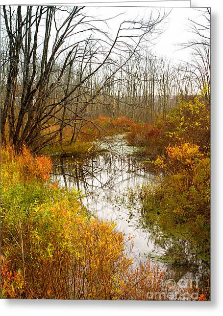 Last Burst Of Color Greeting Card by A New Focus Photography