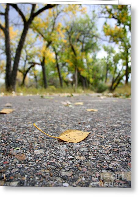 Walk Paths Greeting Cards - Last Call Greeting Card by Casey Hanson