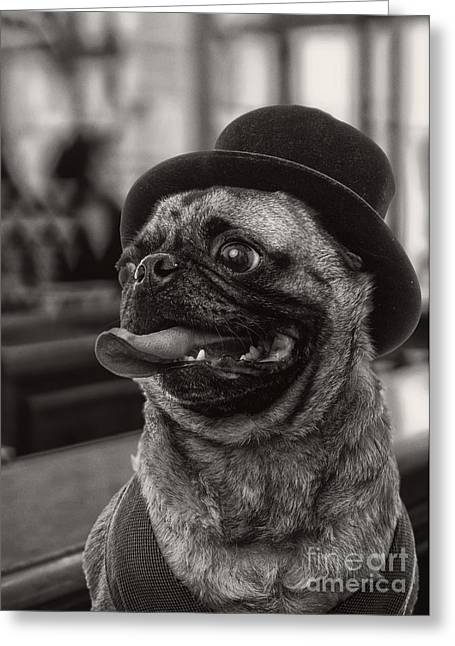 Dogs. Pugs Greeting Cards - Last Call Pug Greeting Card Greeting Card by Edward Fielding