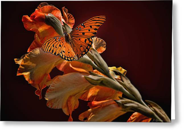 Gladiolas Greeting Cards - Last Colors of Summer Greeting Card by Joe Granita
