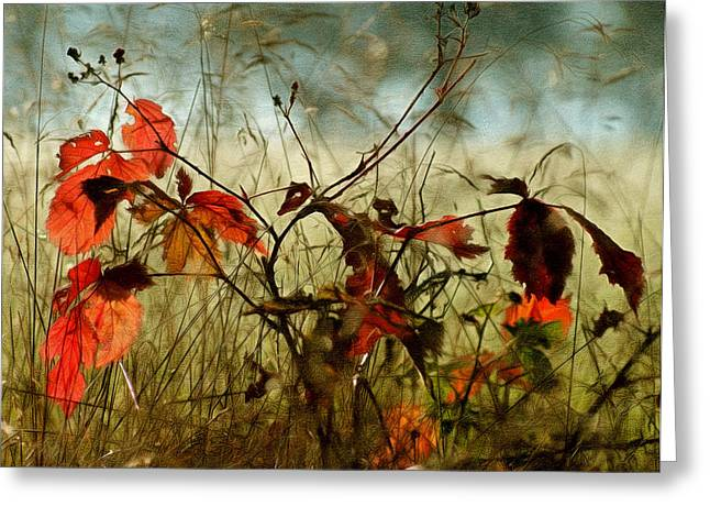 Reds Of Autumn Mixed Media Greeting Cards - Last Days Of Autumn Greeting Card by Georgiana Romanovna