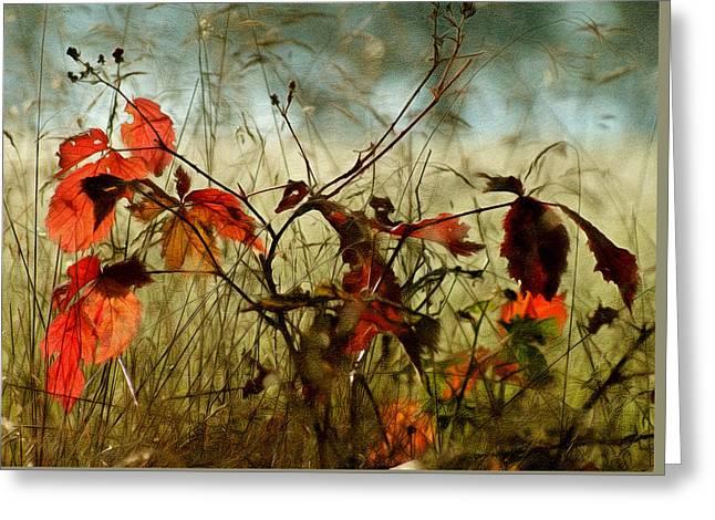Last Days Of Autumn Greeting Card by Georgiana Romanovna