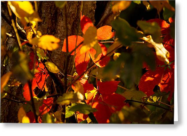 Red Fallen Leave Photographs Greeting Cards - Last days of summer Greeting Card by Gloria Pasko