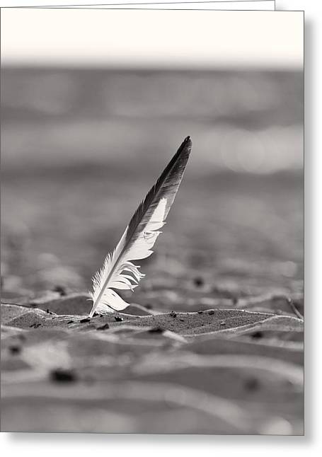 Sand Dunes Greeting Cards - Last Days of Summer in Black and White Greeting Card by Sebastian Musial
