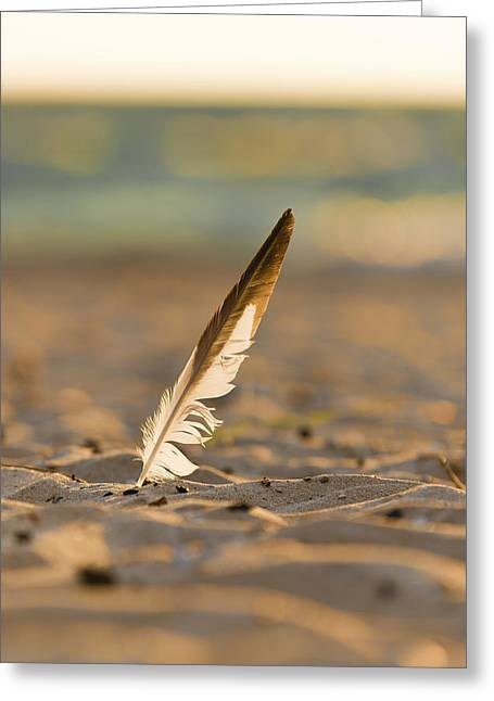 Dunes Greeting Cards - Last Days of Summer Greeting Card by Sebastian Musial