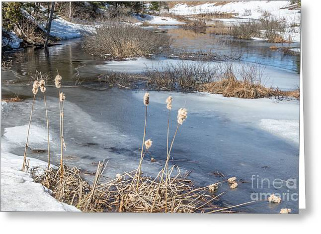 Last Days Of Winter Greeting Card by Jola Martysz