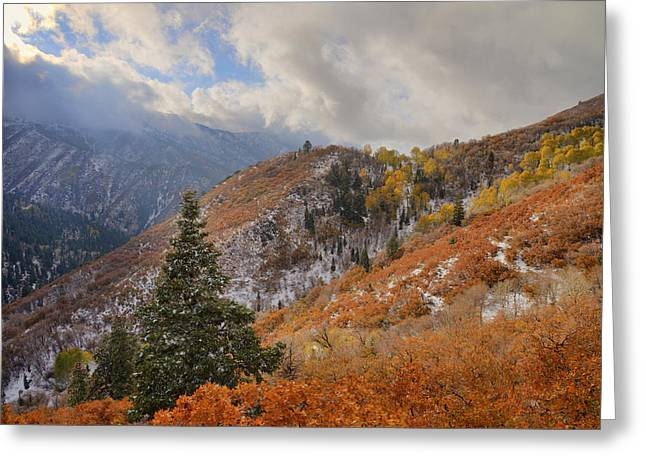 Ridges Greeting Cards - Last Fall Greeting Card by Chad Dutson