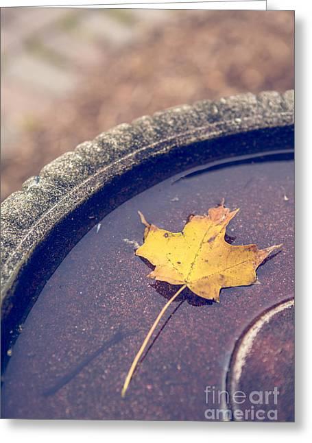 Bird Bath Greeting Cards - Last Leaf of Autumn Greeting Card by Diane Diederich