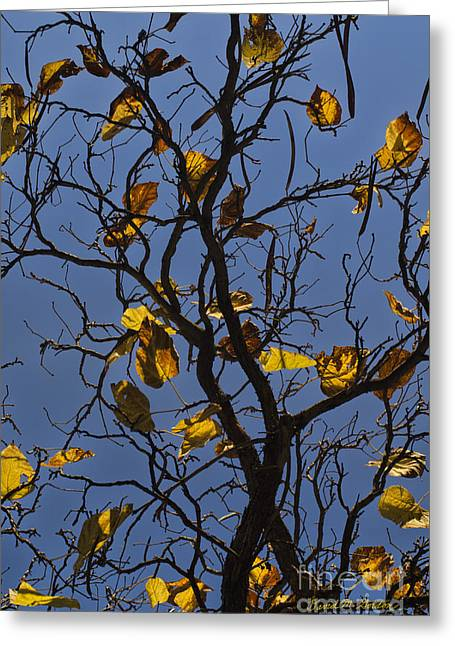 Chromatic Greeting Cards - Last Leaves of Autumn Greeting Card by Dave Gordon