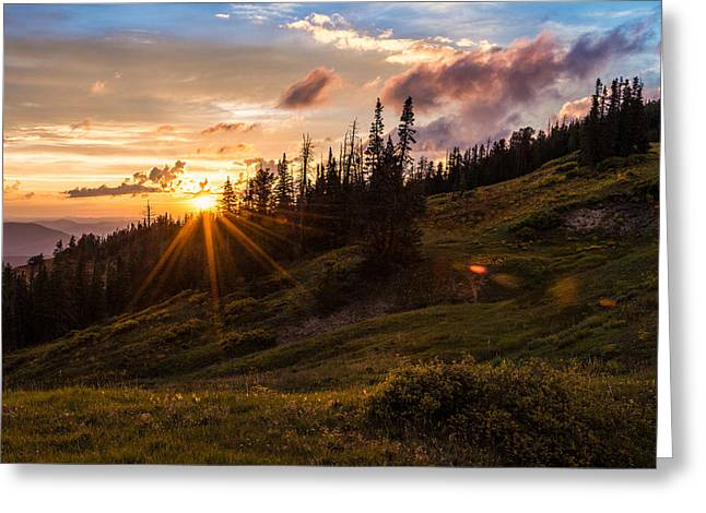 Pine Tree Photographs Greeting Cards - Last Light at Cedar Greeting Card by Chad Dutson