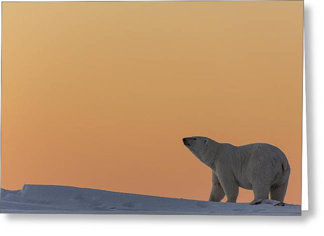 Ocean Mammals Greeting Cards - Last Light in the Arctic Greeting Card by Tim Grams