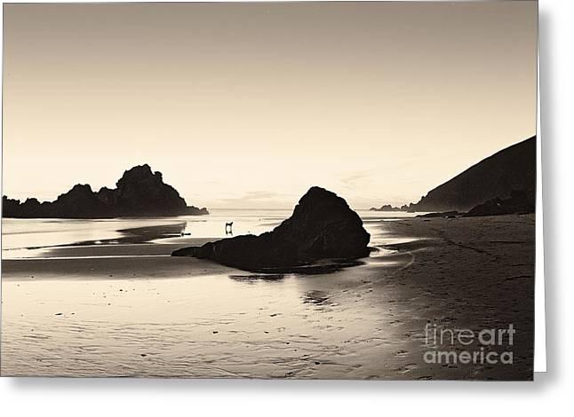 Big Sur Beach Greeting Cards - Last Light Pfeiffer Beach Greeting Card by David Gordon