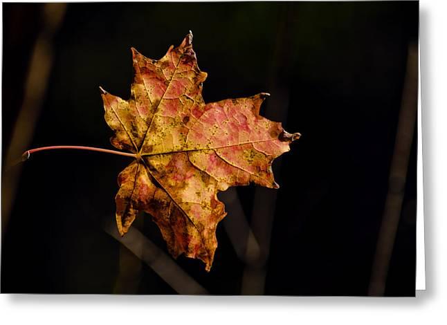 Last Maple Leaf Greeting Card by LeeAnn McLaneGoetz McLaneGoetzStudioLLCcom