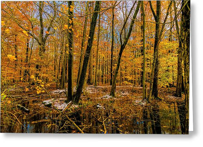 Fall Photographs Greeting Cards - Last of Autumns Color Greeting Card by Louis Dallara