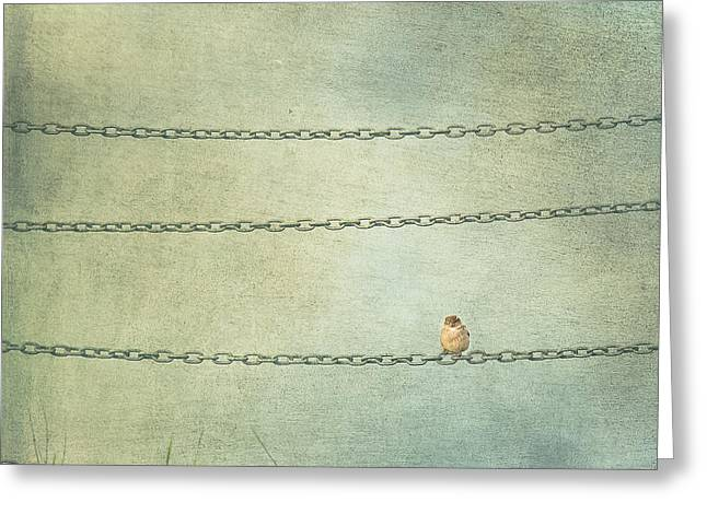 New Zealand Photographs Greeting Cards - Last of The Chain Gang Greeting Card by Constance Fein Harding