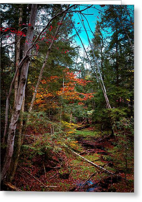 Lush Green Greeting Cards - Last of the Color on Green Bridge Road Greeting Card by David Patterson