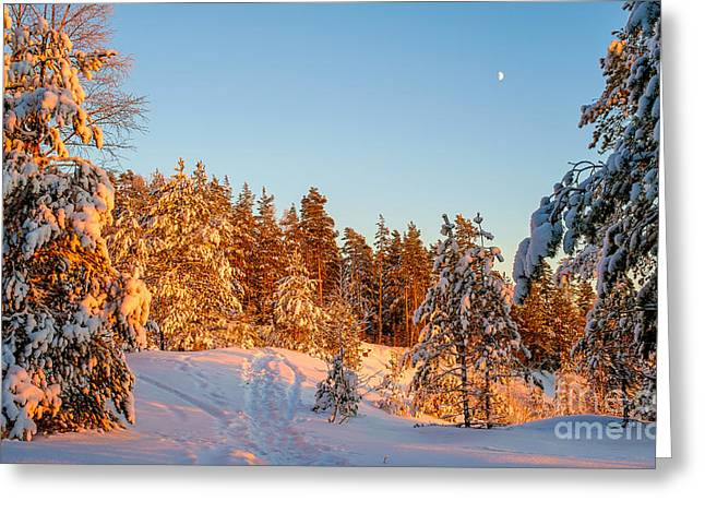 Snowy Evening Greeting Cards - Last Rays of Light in the Winter Forest Greeting Card by Ismo Raisanen