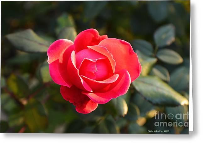 Centifolia Greeting Cards - Last Rose of Summer Greeting Card by Luther   Fine Art