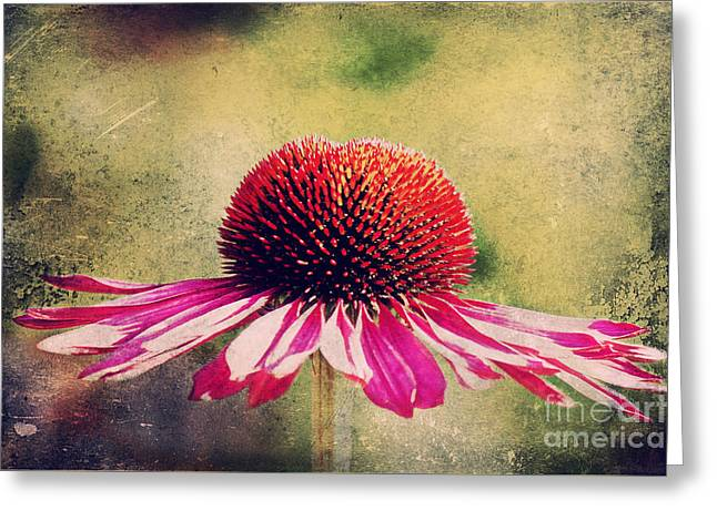 Abstracted Coneflowers Greeting Cards - Last summer feeling Greeting Card by Angela Doelling AD DESIGN Photo and PhotoArt