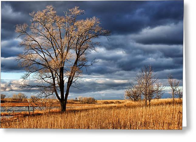 Recreational Park Greeting Cards - Late Afternoon at Walnut Creek Lake #2 Greeting Card by Nikolyn McDonald