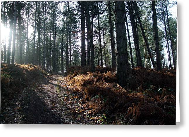 Sledge Training Greeting Cards - Late Afternoon on Cannock Chase Greeting Card by Jean Walker