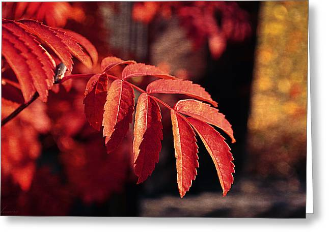 Late Autumn Colors Greeting Card by Maria Angelica Maira