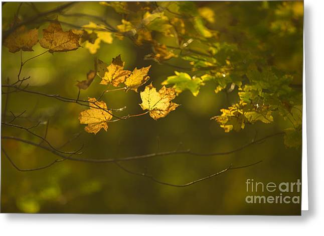 Russet Greeting Cards - Late Autumn Greeting Card by Diane Diederich