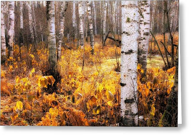 Mary Amerman Greeting Cards - Late Autumn Glow Greeting Card by Mary Amerman