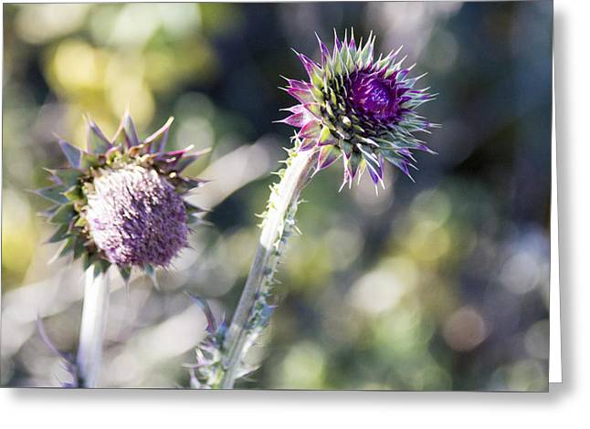 Late Bloomers Greeting Card by Dana Moyer