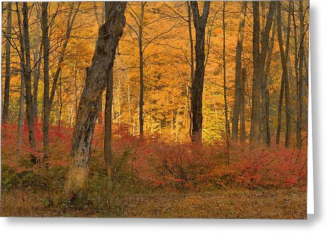 Landsape Greeting Cards - Late Day Autumn Light Greeting Card by Stephen  Vecchiotti