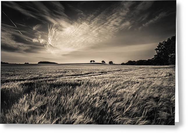 Monochrome Greeting Cards - Late evening Greeting Card by Chris Fletcher