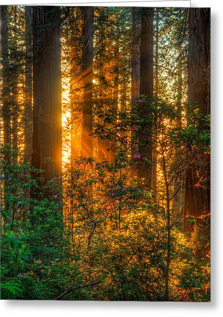 Damnation Greeting Cards - Late Evening Glow at Damnation Creek  Greeting Card by Beau Rogers
