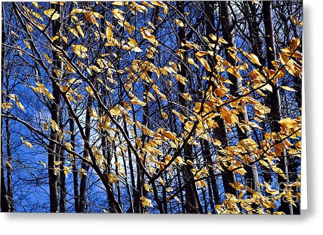 Yellow Leaves Photographs Greeting Cards - Late fall Greeting Card by Elena Elisseeva