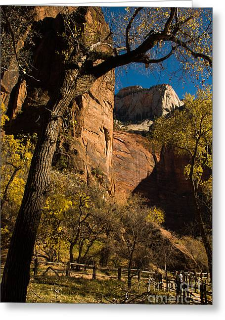 Geobob Greeting Cards - Late Fall Temple of Sinavava Zion National Park Utah Greeting Card by Robert Ford