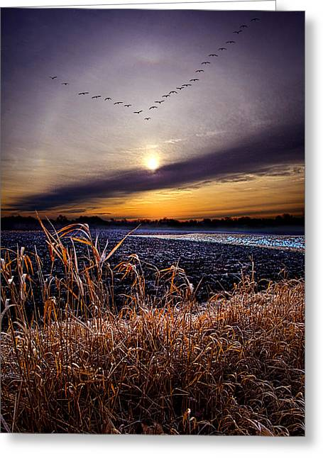 Geographic Greeting Cards - Late For Dinner Greeting Card by Phil Koch