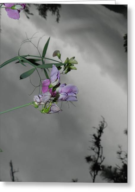 Glass Flowers And Leaves Greeting Cards - Late for the Sky II Greeting Card by Nicholas Novello