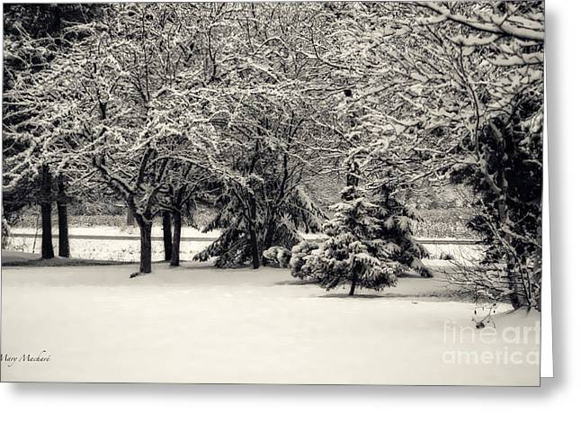 Sleet Greeting Cards - Late on a Cold Winter Day Greeting Card by Mary Machare