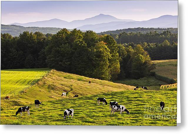 Haze Greeting Cards - Late Summer Countryside Greeting Card by Alan L Graham