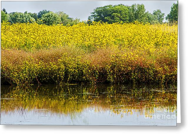 Reflection Harvest Greeting Cards - Late Summer Reflections Greeting Card by Darleen Stry