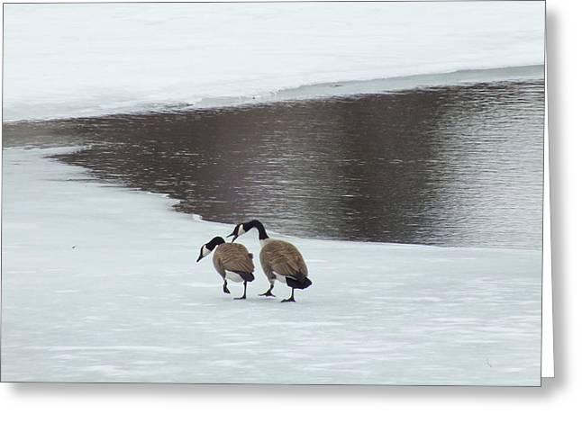 Print On Canvas Greeting Cards - Late Winter Geese Greeting Card by Gene Cyr