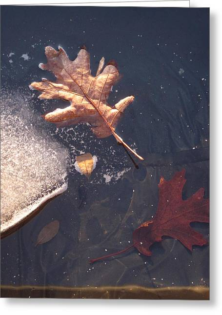 Guy Ricketts Photography Greeting Cards - Late Winter Greeting Card by Guy Ricketts