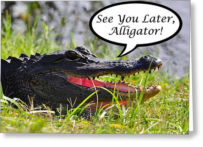 Florida Gators Digital Greeting Cards - Later Alligator Greeting Card Greeting Card by Al Powell Photography USA