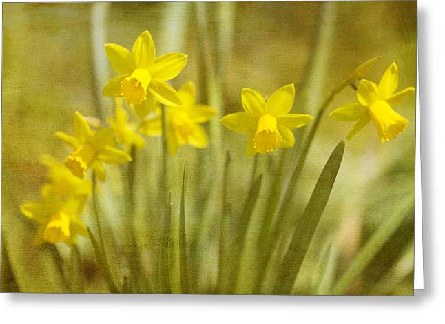 Narcissus Greeting Cards - Laughing Dafs Greeting Card by Rebecca Cozart
