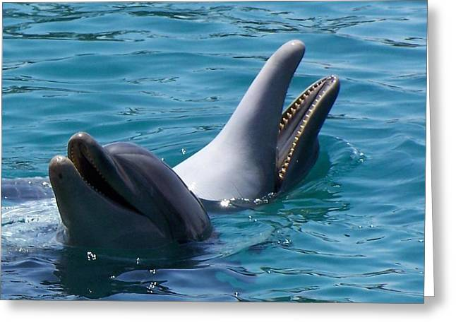 Noreen Hacohen Greeting Cards - Laughing Dolphins Greeting Card by Noreen HaCohen